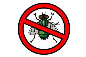Variedades posts como evitar ou afastar moscas - Como espantar moscas ...