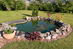 C mo construir un estanque para peces for Como construir estanques para peces